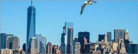New NYC law makes bird-friendly glass a must on buildings