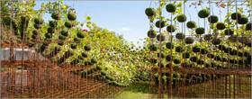 Nomad Studio installs forest to make fertile soil