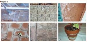 Why Red Brick Turns White: Understanding efflorescence