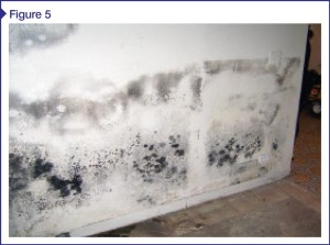Mold growth on interior finish due to improper placement of vapor barrier.