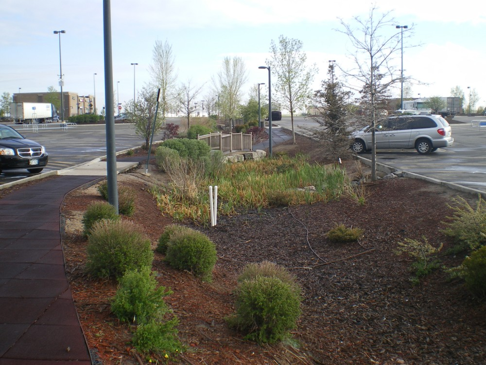 An interactive bioswale at a big box store with a pedestrian bridge connecting the paths.