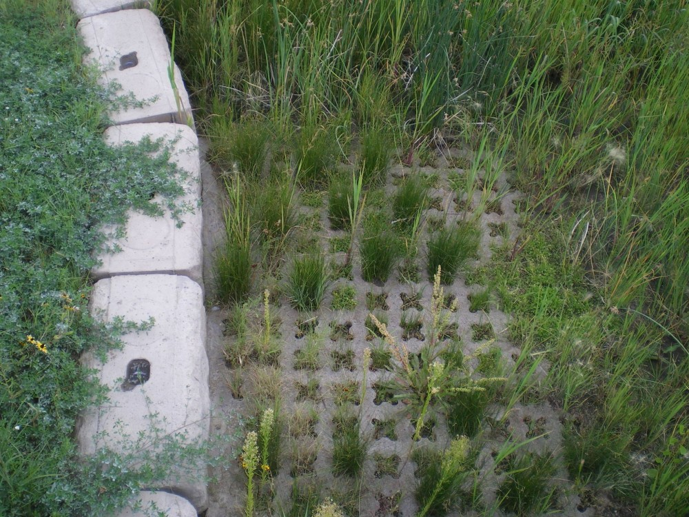 A close up of the vegetation within the void structured concrete of this detention pond showing how roots are protected from maintenance scrapers.