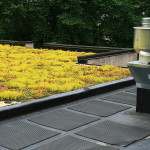 partial green roof top covered with sedum plants