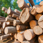 A new Leadership in Energy and Environmental Design (LEED) pilot alternative compliance path (ACP) by the U.S. Green Building Council (USGBC) aims to eliminate illegally sourced building materials.  Photo © Bigstock.com/rgbspace