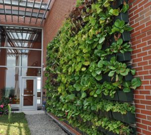 Jersey Shore University Medical Center in Neptune, New Jersey, features two living walls in their new outpatient facility. Photo courtesy LiveWall