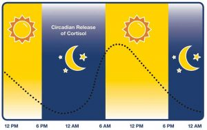 Figure 1: Normal circadian rhythms based on the natural pattern of day and night.