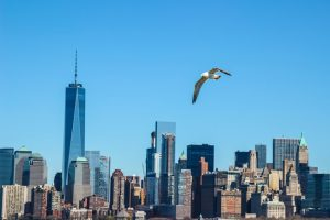 The New York City Council has passed a legislation that makes bird-friendly glass a requirement in buildings throughout the city. Photo © www.bigstockphoto.com