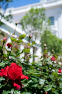 The Rose Garden in the White House is set to be restored. Photo courtesy The White House from Washington, DC/Wikimedia Commons