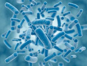 Microbes and microorganisms, such as bacteria, algae, fungi, and mold, can only be detected by the naked eye when they have multiplied to the millions. Image © Getty Images/iStockphoto. Image courtesy Linetec